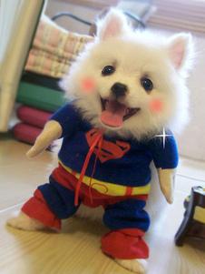 الكلب هالوين ازياء سوبرمان الأزرق ازياء هالوين الحيوانات الأليفة
