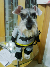 Anime Costumes AF-S2-644157 Batman Dog Costume Deep Gray Holloween Pet Clothing