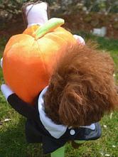 Anime Costumes AF-S2-659959 Pumpkin Pet Costume Pet Mummy Orange Fleece Dog Clothing