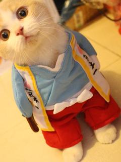 dd155336b8a8 Costume per Animali Domestici Cosplay tweed blu Oceano top per gatto  divertente Carnevale